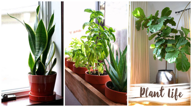 Decorating with Natural Elements Plant Life